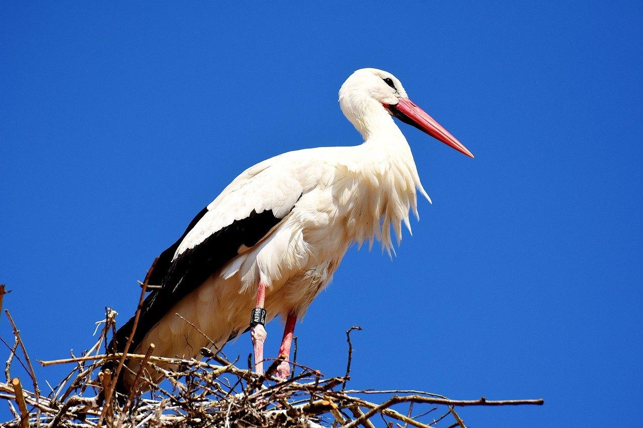 Das Krafttier Storch und seine Bedeutung